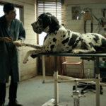 Matteo Garonne's DOGMAN stars Marcello Fonte in a star-making performance