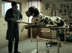 Matteo Garonne's DOGMAN stars Marcello Fonte in a star-making performance
